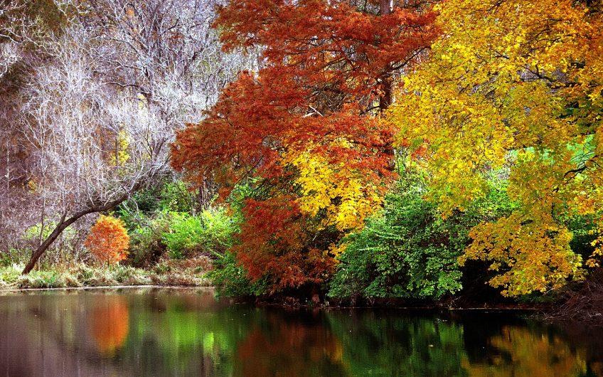 Cincinnati – Spring Grove Cemetery  Arboretum 22 Autumn Reflection22 15630100199