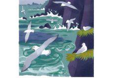 Bird of the Month: The Fulmar - John McEwen