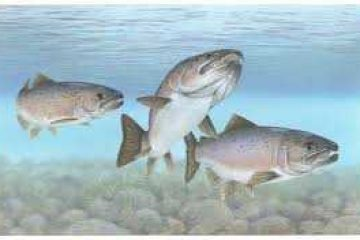 The nuclear threat to fish. By Anthony Lipmann