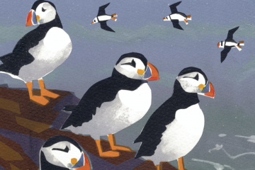 The puffin's favourite Welsh island