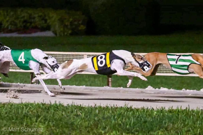 Racing Greyhound Us