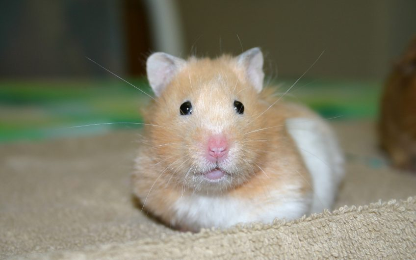 Want to avoid the hamster look? Get vaccinated against mumps