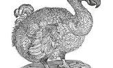 The dodo's final legacy