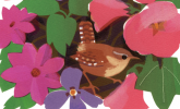 Bird of the Month: Wren