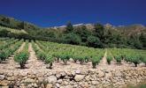 Wine: Minervois