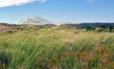 Profitable Wonders: Wind is the Breath of Life