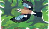 Bird of the Month: The Jay