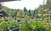 Open the garden centres!