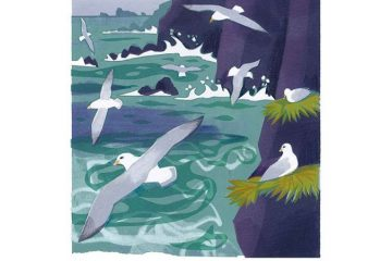Bird of the Month: The Fulmar - John McEwen