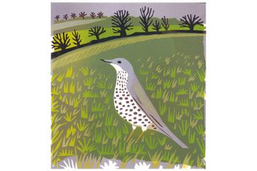 Bird of the Month: Mistle Thrush