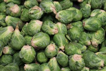 Kitchen Garden: Brussel Sprouts
