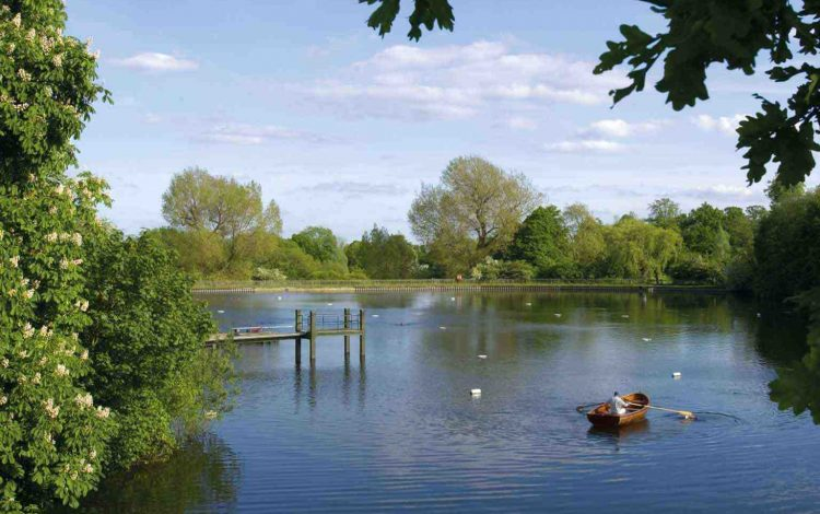 Hunter on Hampstead Heath - Hunter Davies