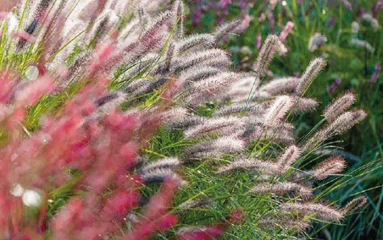 Grass Menagerie - David Wheeler