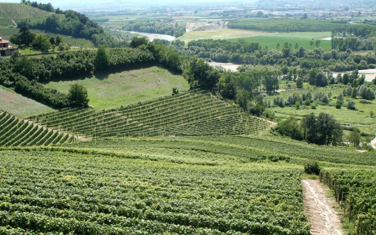 Wine: Italy's alps uncorked